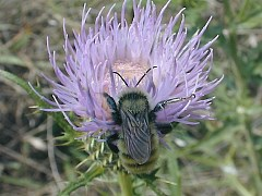 Illinois Wildflowers
