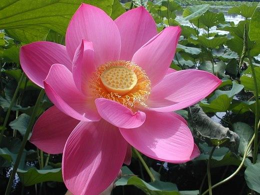 цветы и цветки заповедника Астраханского